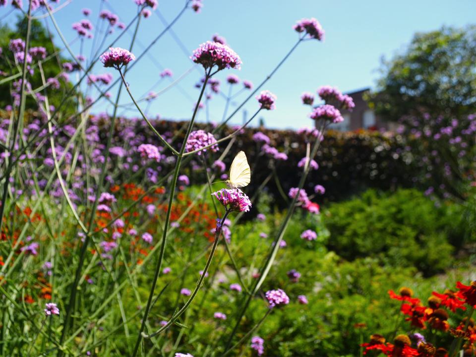 bloemen organische tuin