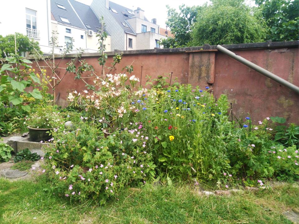 beplanting natuurlijk tuin