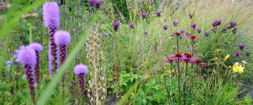 bloemen natuurlijke tuin