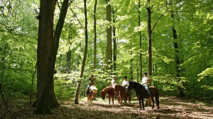 Einen ruhigen Moment im Fruhling grunen Wald.