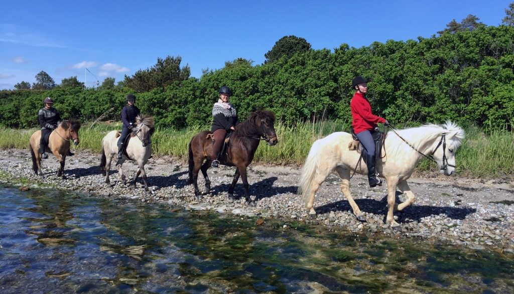 Horses, water, sand and Sun.
