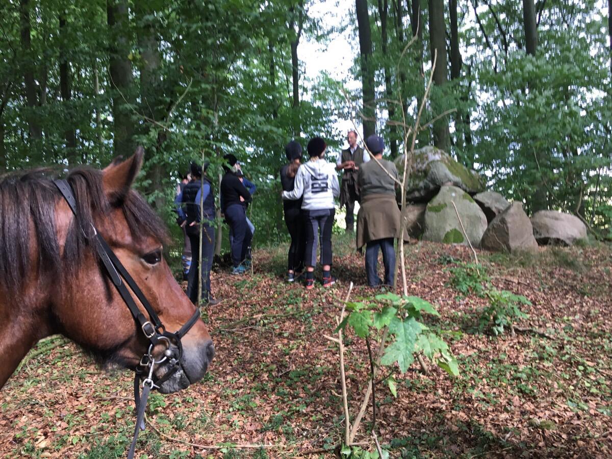 Hestene venter mens den spændende historie om stendyssen fortælles.