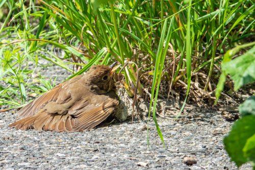 Parasiten - die Qual der Vögel