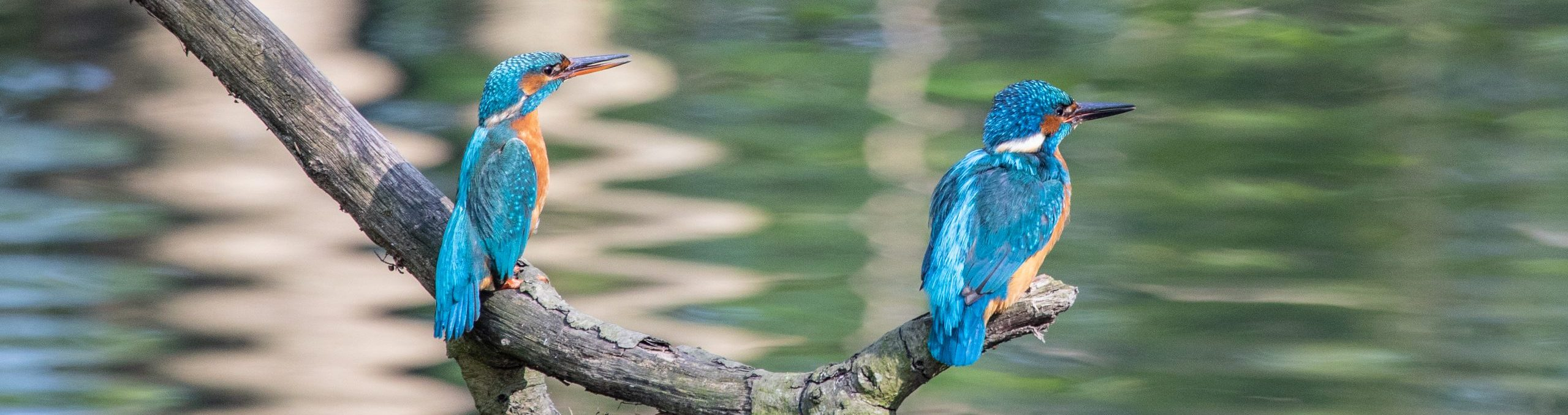 Vögel-Natur-Umwelt
