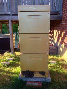 Bistade med bier udenfor ved indgangen