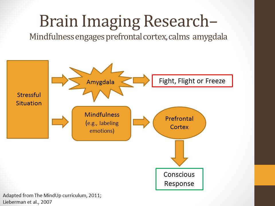 brain-imaging-research