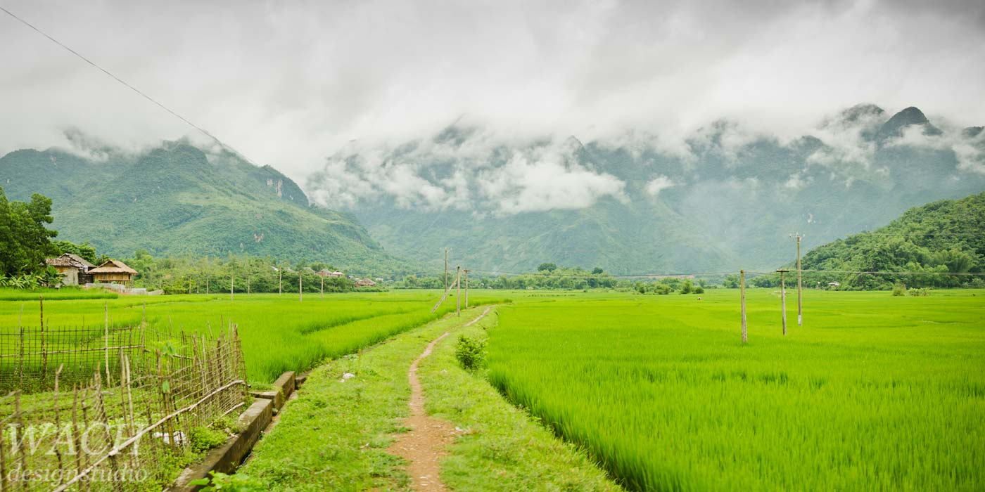 View over bright green vietnamese paddy fields
