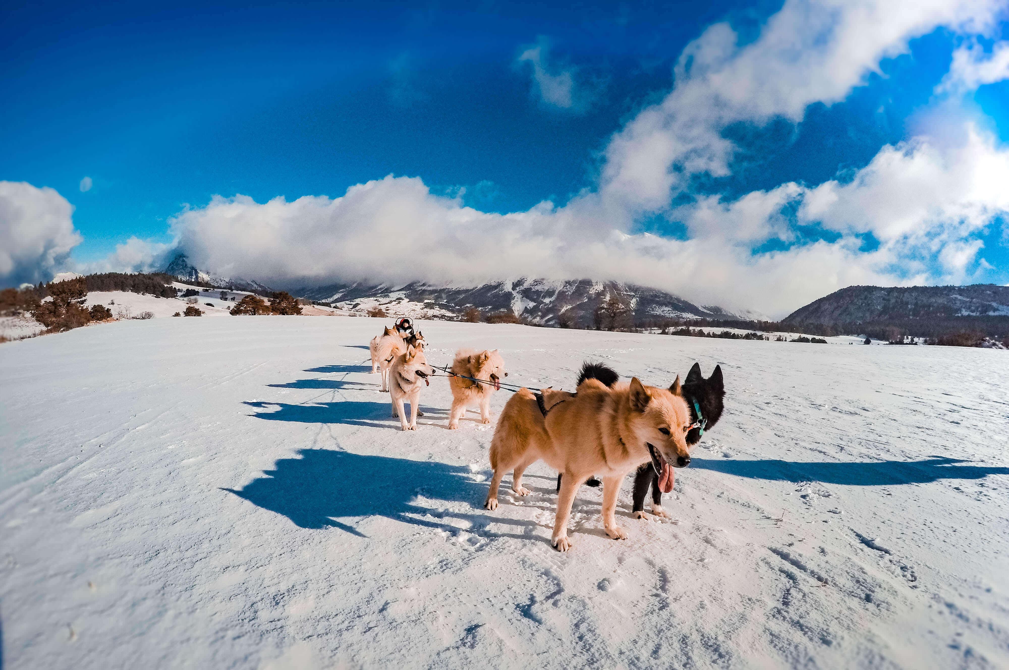 Honden slee in La Joue du Loup