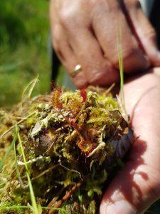 Flora en Fauna Weerribben Wieden