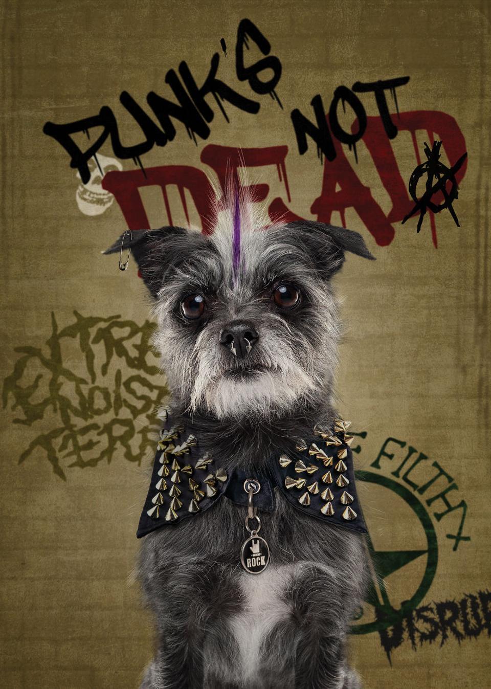 A dog as a punk