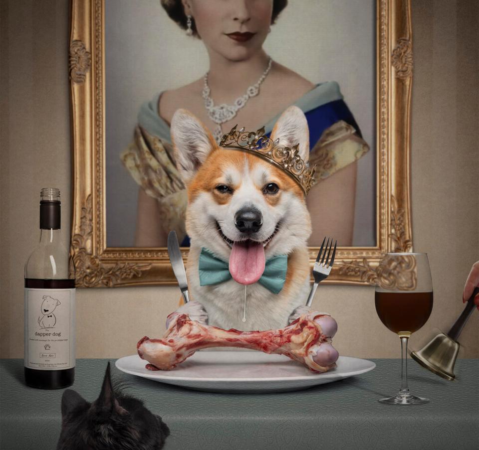 Corgi dog with crown