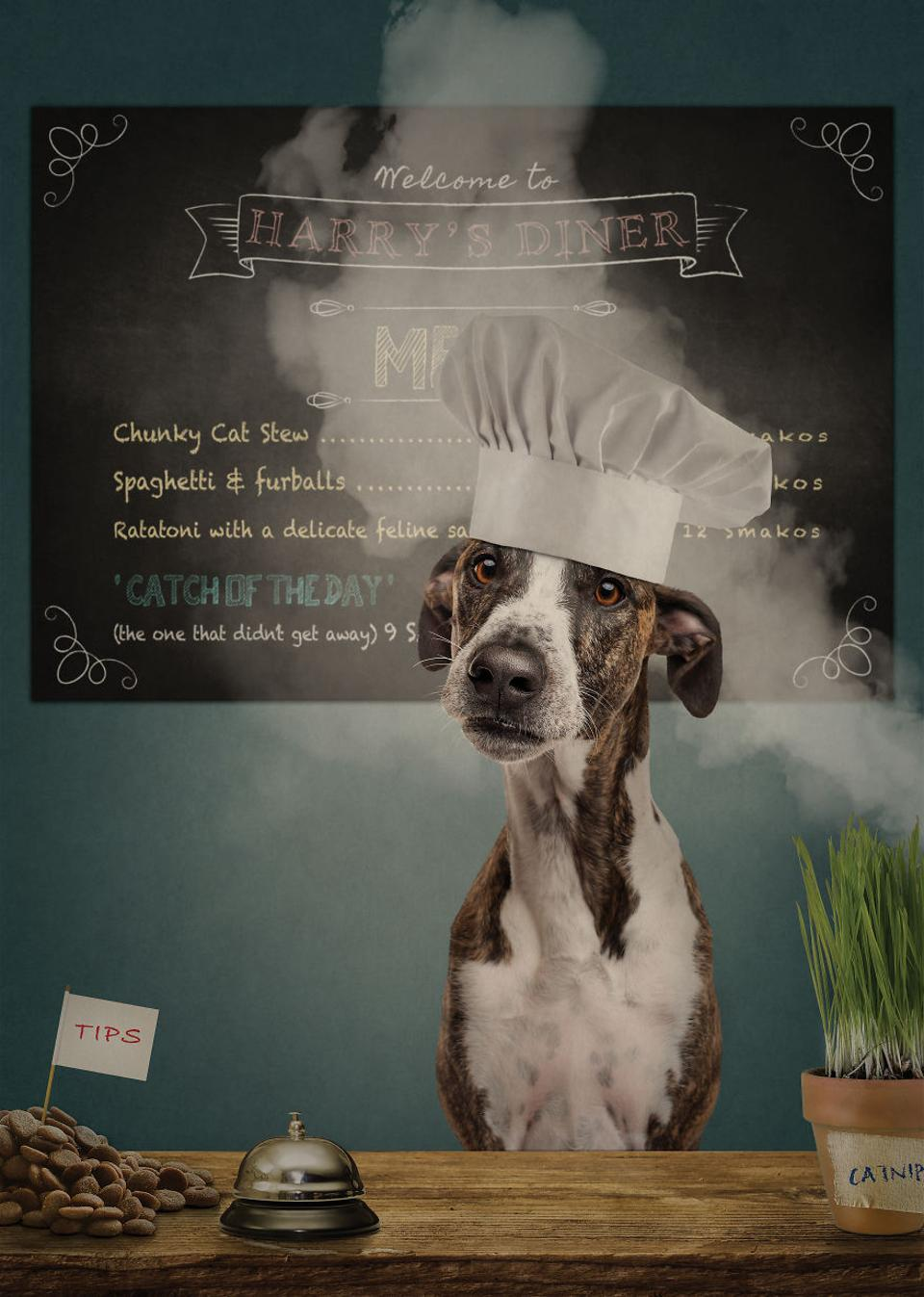 Dog as a chef