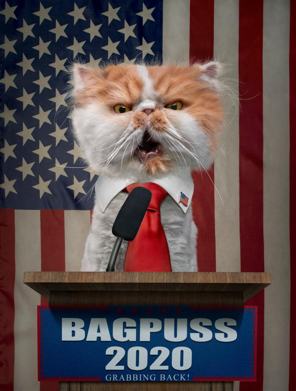 Cat for election