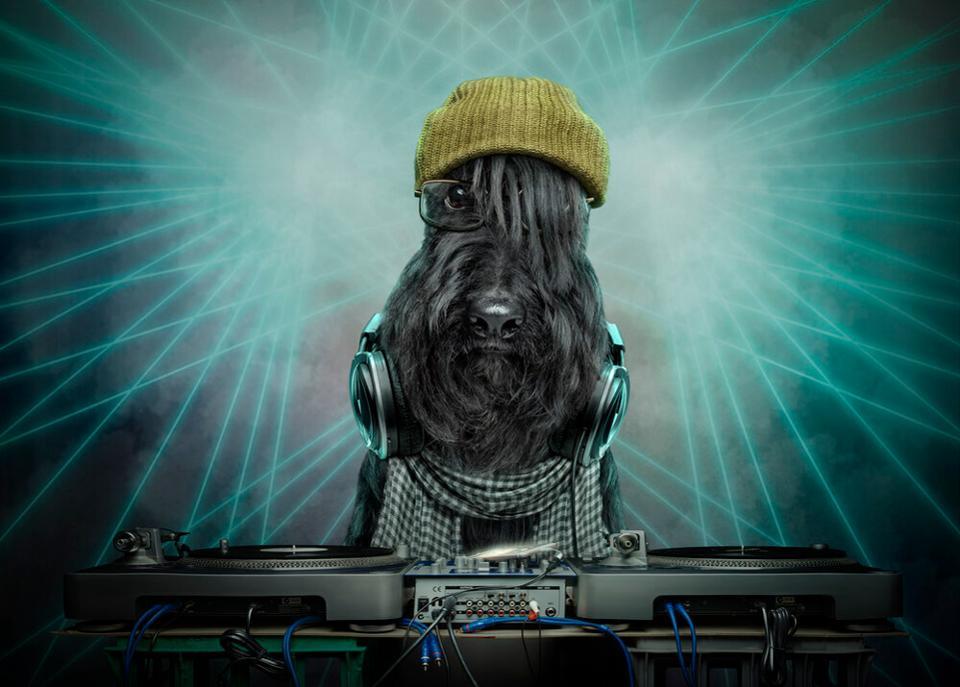 Dog as a Dj