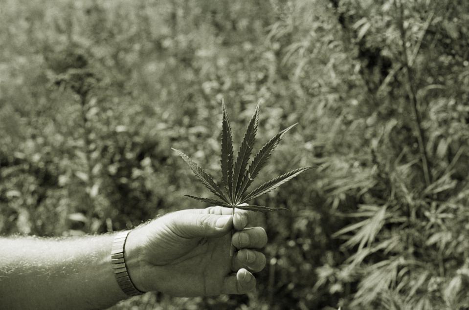 Holding Marijuana Leaf