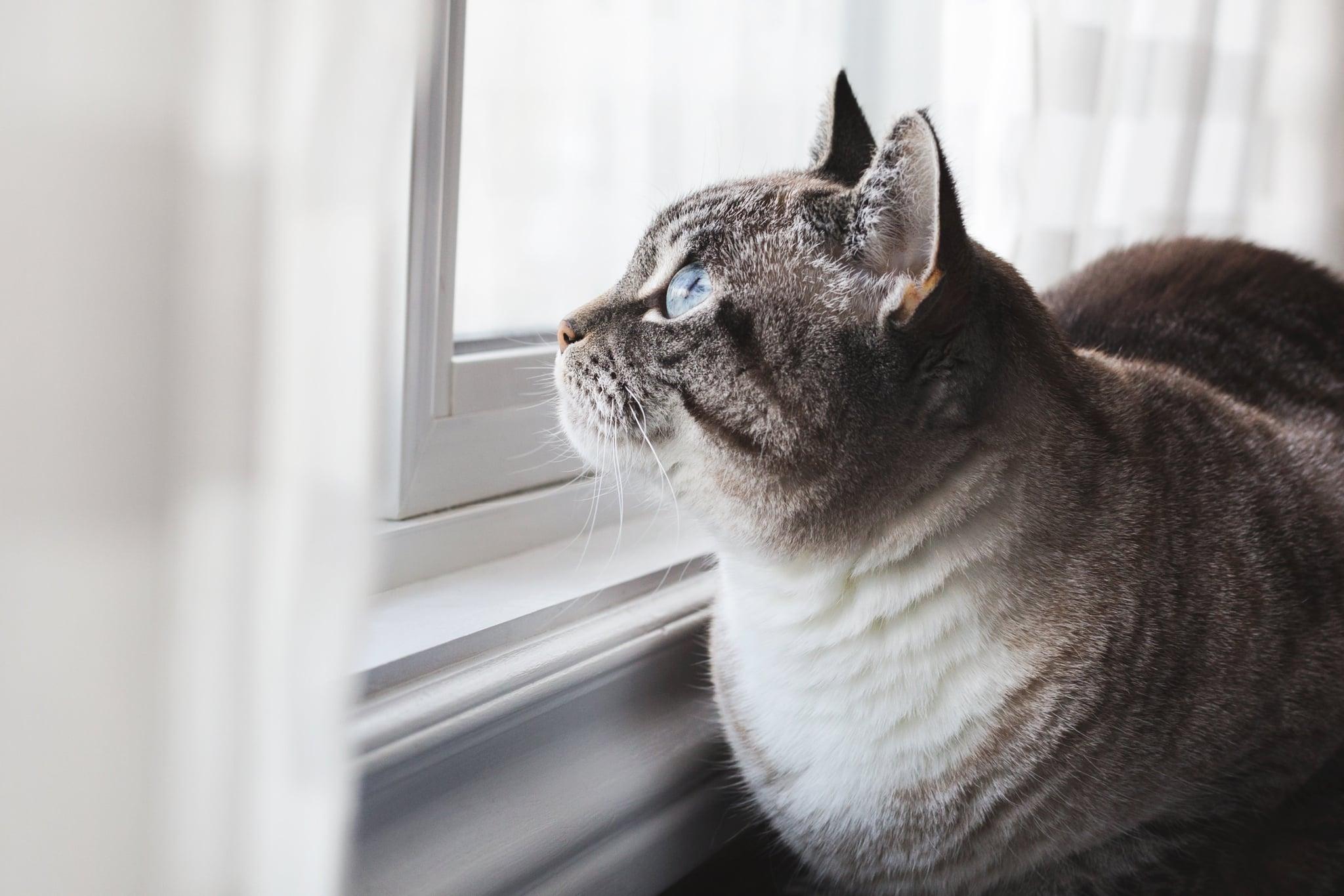 tmp_aa3w1b_24c5984ba0b95f06_blue-eyed-cat-daydreams.jpg