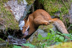 Liina Heikkinen's image of a fox cub won her the young wildlife photographer of the year title.