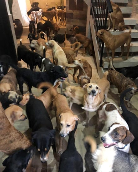 Crowded house: Ricardo Pimentel's home smelled terrible but kept hundreds of dogs safe.