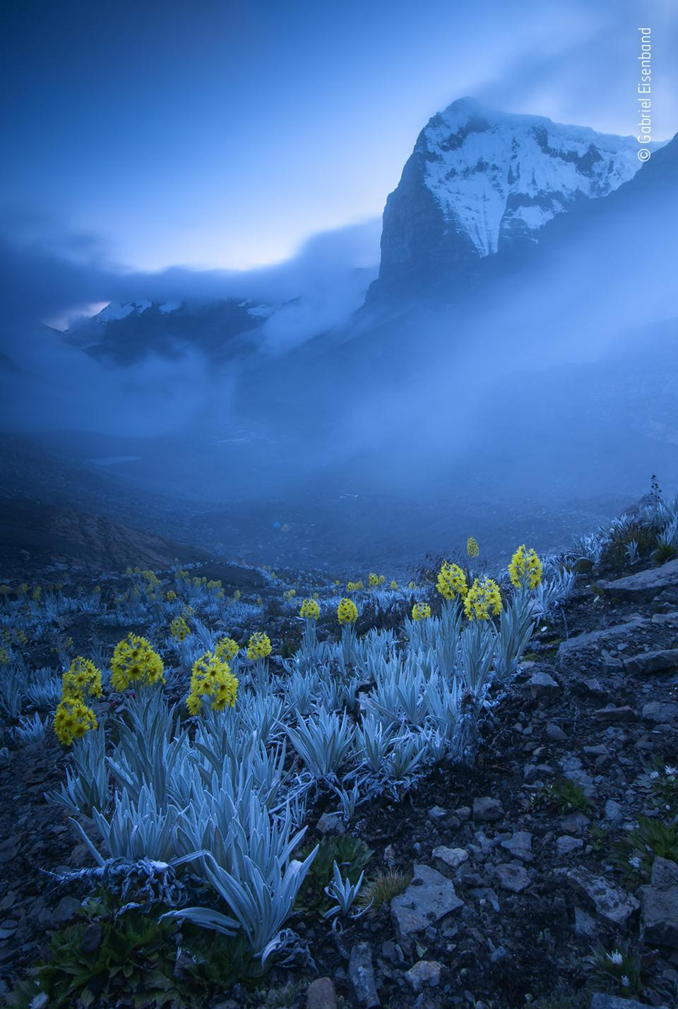 Wildlife Photographer of the Year: yellow flowers in the highest peak  of Colombian Andes,