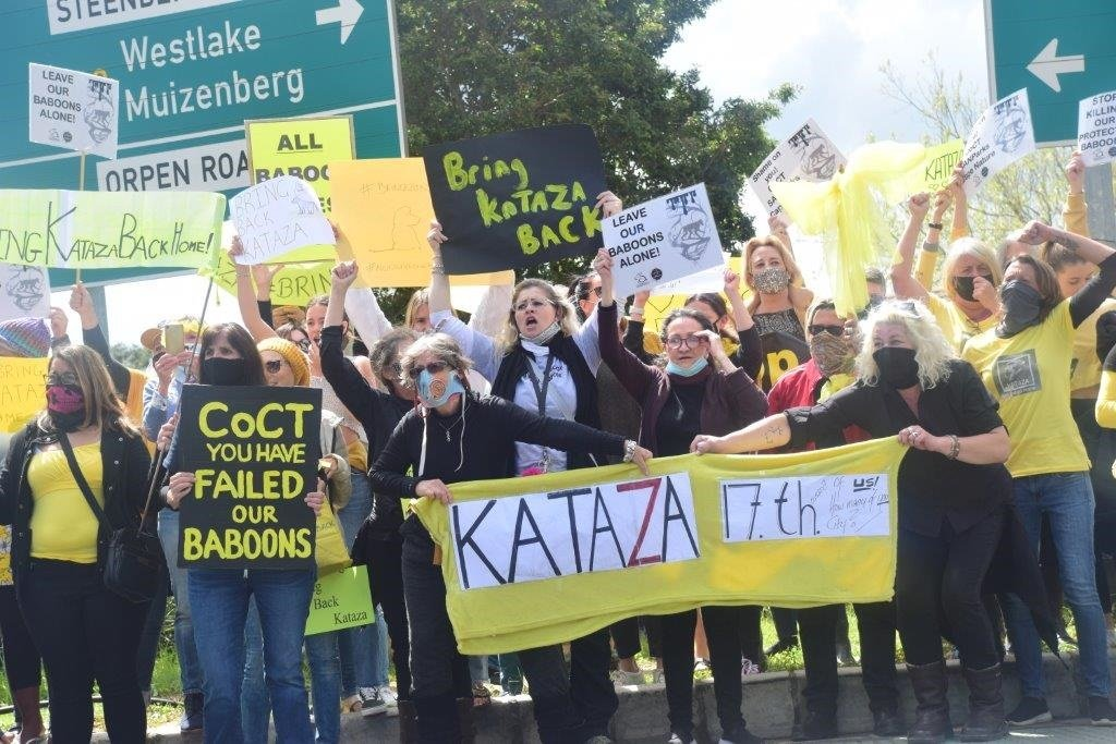 Cape Town residents demonstrating against the relocation of Slangkop baboon, Kataza.