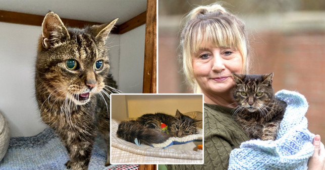 Taz had been living as a stray for years but was rescued and Mandy realised it was him after she spotted a picture on Facebook