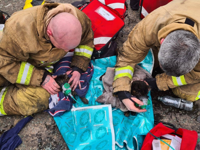 Firefighters from Runcorn Fire Station give two cats oxygen after rescuing them from a burning house