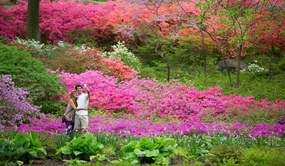 Couple in the Azalea Garden of New York Botanical Garden.