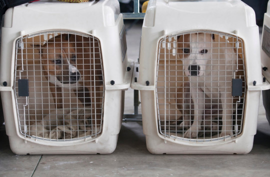 Two dogs in cages.  Nottinghamshire Police have appointed an officer to investigate dog theft.