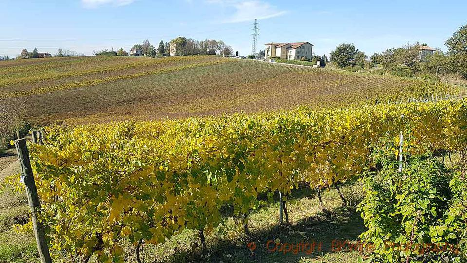 Timorasso vineyards at La Colombera in Colli Tortonesi