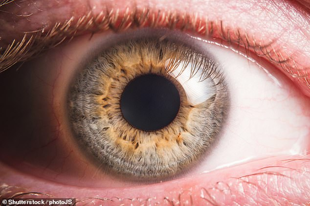 These findings will help to improve the understanding of eye diseases such as pigmentary glaucoma and ocular albinism, where eye pigment levels play a role
