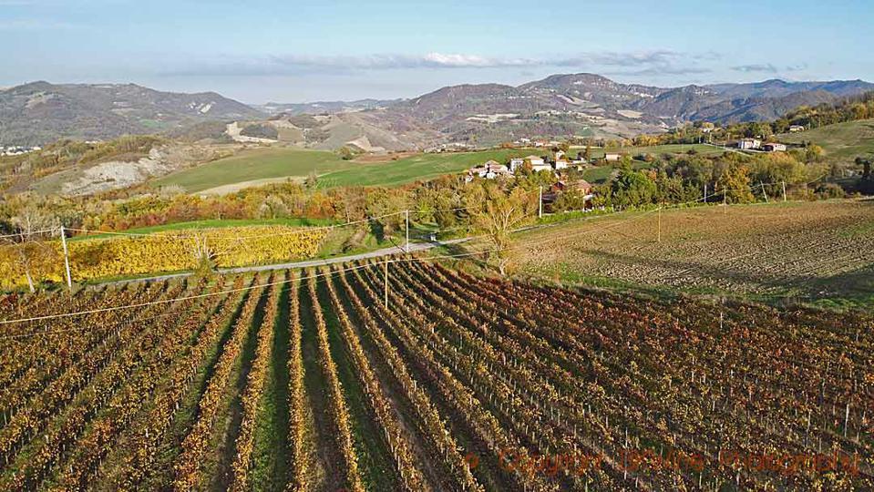 Timorasso vineyards at I Caprini in Colli Tortonesi