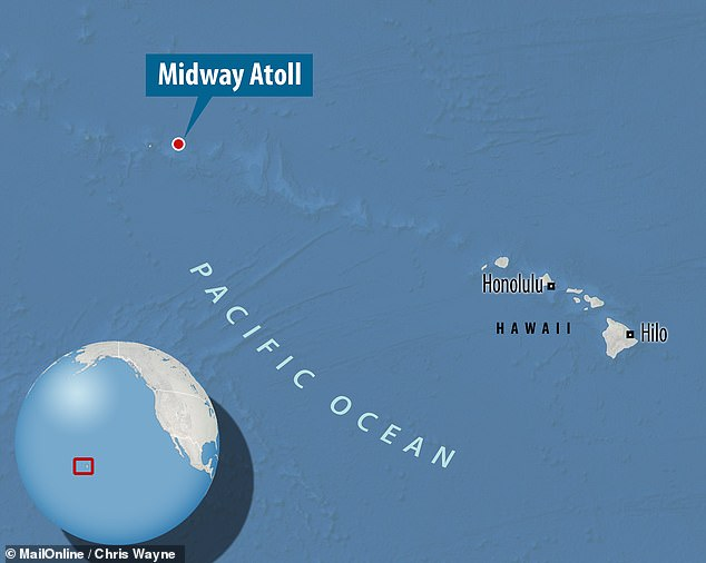 The septuagenarian seabird gave birth again last month on the breeding habitat of Midway Atoll, a tiny island in the north Pacific, some 1,300 miles from Hawaii