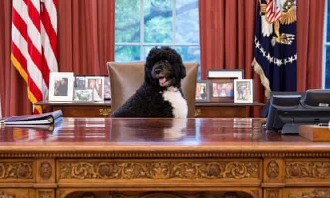 Bo at the White House.