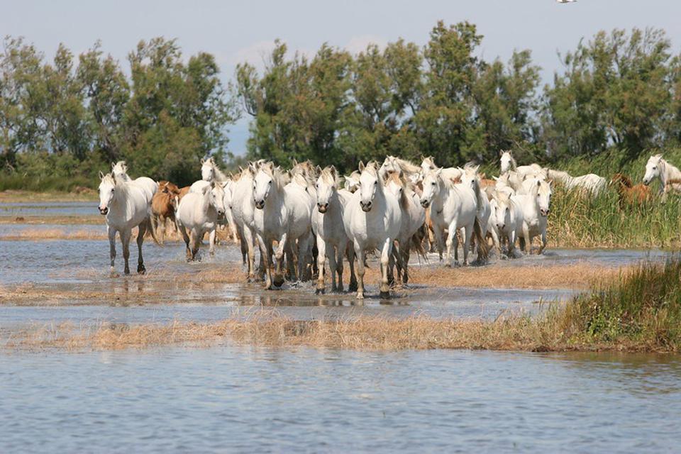 The Camargue Regional Natural Park