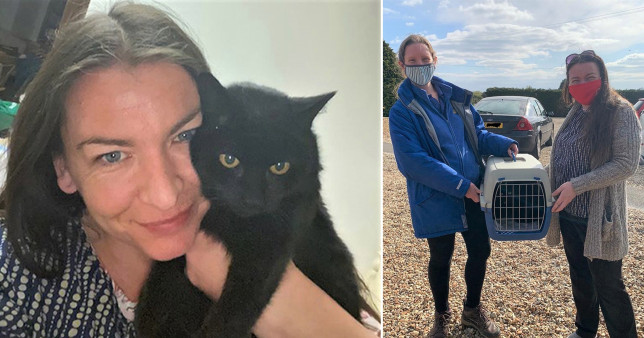 Missing cat reunited with owner after 13 years