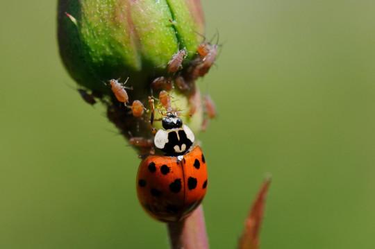 ladybird on a plant