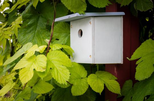 A new blue tit bird box