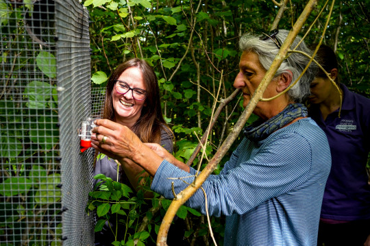 Dr Deborah Brady (left), Species Officer for Back on our Map (BOOM), prepares a cage that will hold a pair of hazel dormice (Credits: PA)