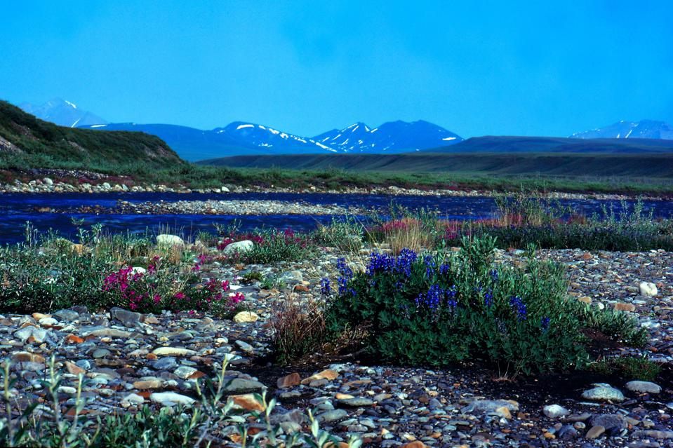 ANWR, Arctic National Wildlife Refuge, Alaska
