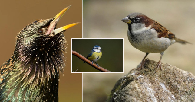 Springwatch presenter shares how to attract more birds to your garden