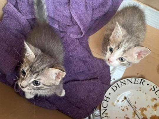 two kittens who were found in a plastic bag in a bin