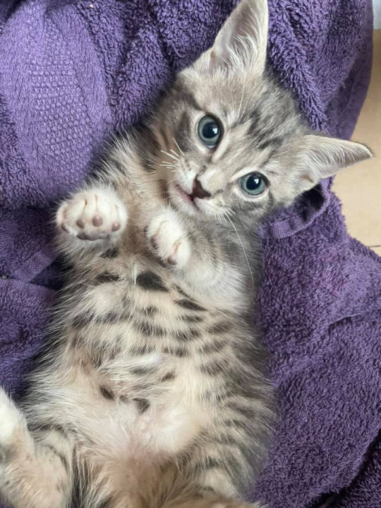 an adorable kitten who was found in a plastic bag in a bin