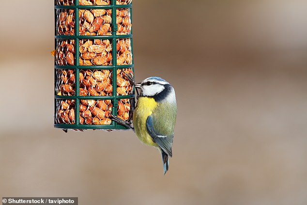 If you want to attract birds back to your garden, the RSPB advises keeping a little food in your feeders