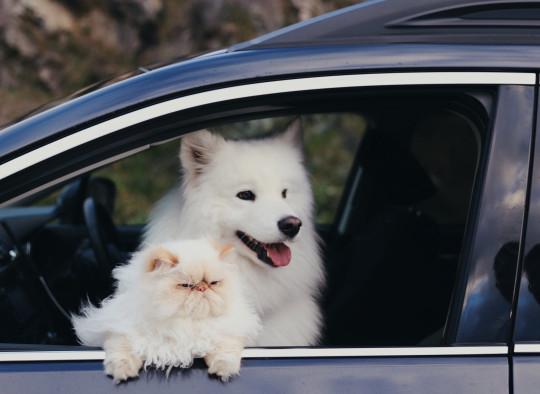 casper and Romeo in the car