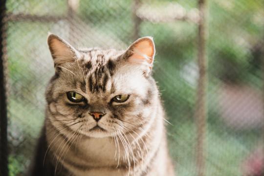 a grumpy cat
