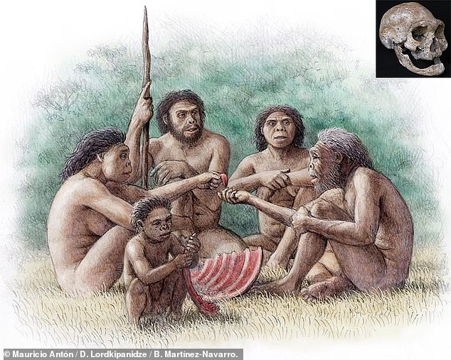 The Dmanisi dog, the team said, could be the ancestor of African hunting dogs — and likely lived alongside early humans in Georgia before dispersing more widely. Pictured: an artist's impression of a group ofHomo erectus who lived at the Dmanisi site