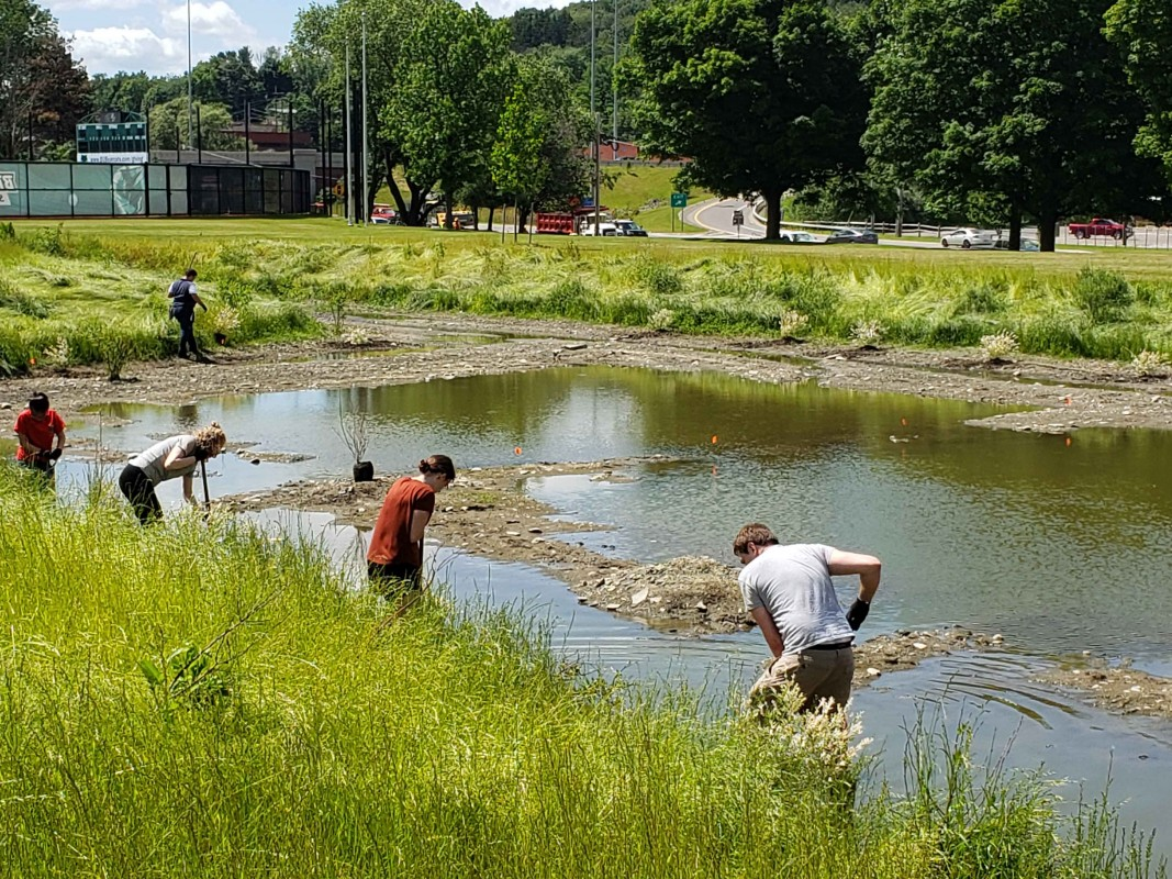 First-Year Research Immersion students in the biogeochemistry track work to restore the Bartle wetlands on campus in 2019.