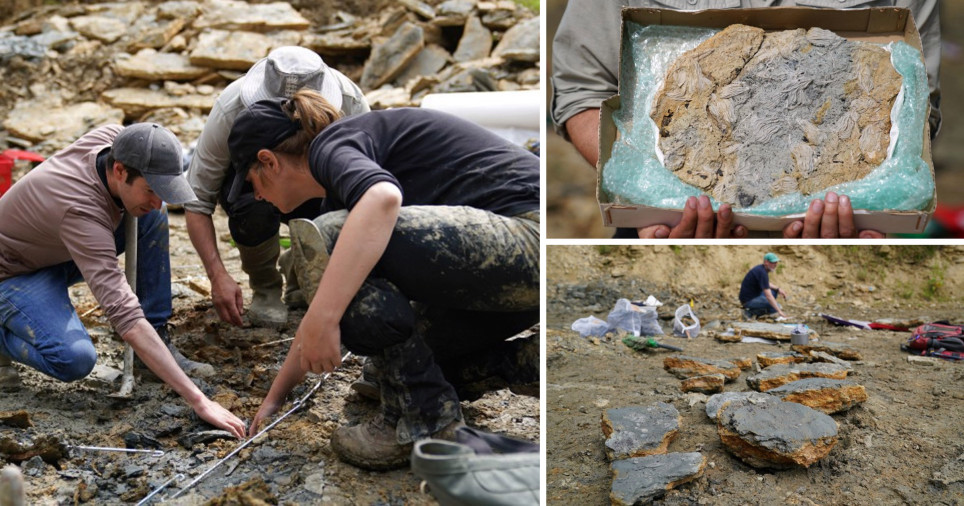 Couple used Google Earth to find largest collection of rare marine fossils ever discovered in UK