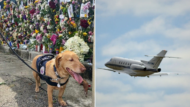Teddy (left), a 6-year-old basset hound-Labrador mix, was flown home in a private plane (right) after providing therapy to Surfside condo collapse victims' families