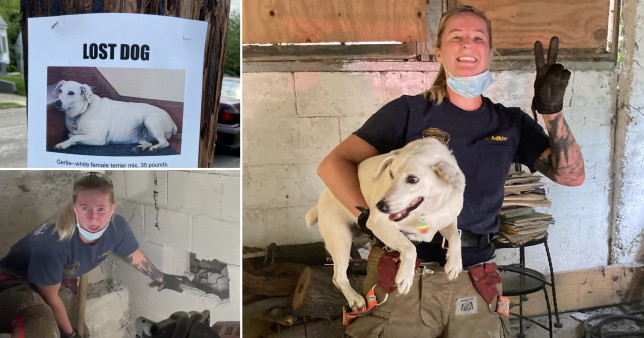 Firefighters smash through wall to rescue dog trapped for five days